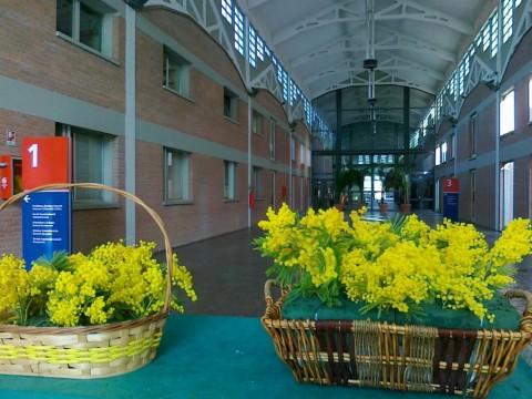 mimose nella galleria Cmc